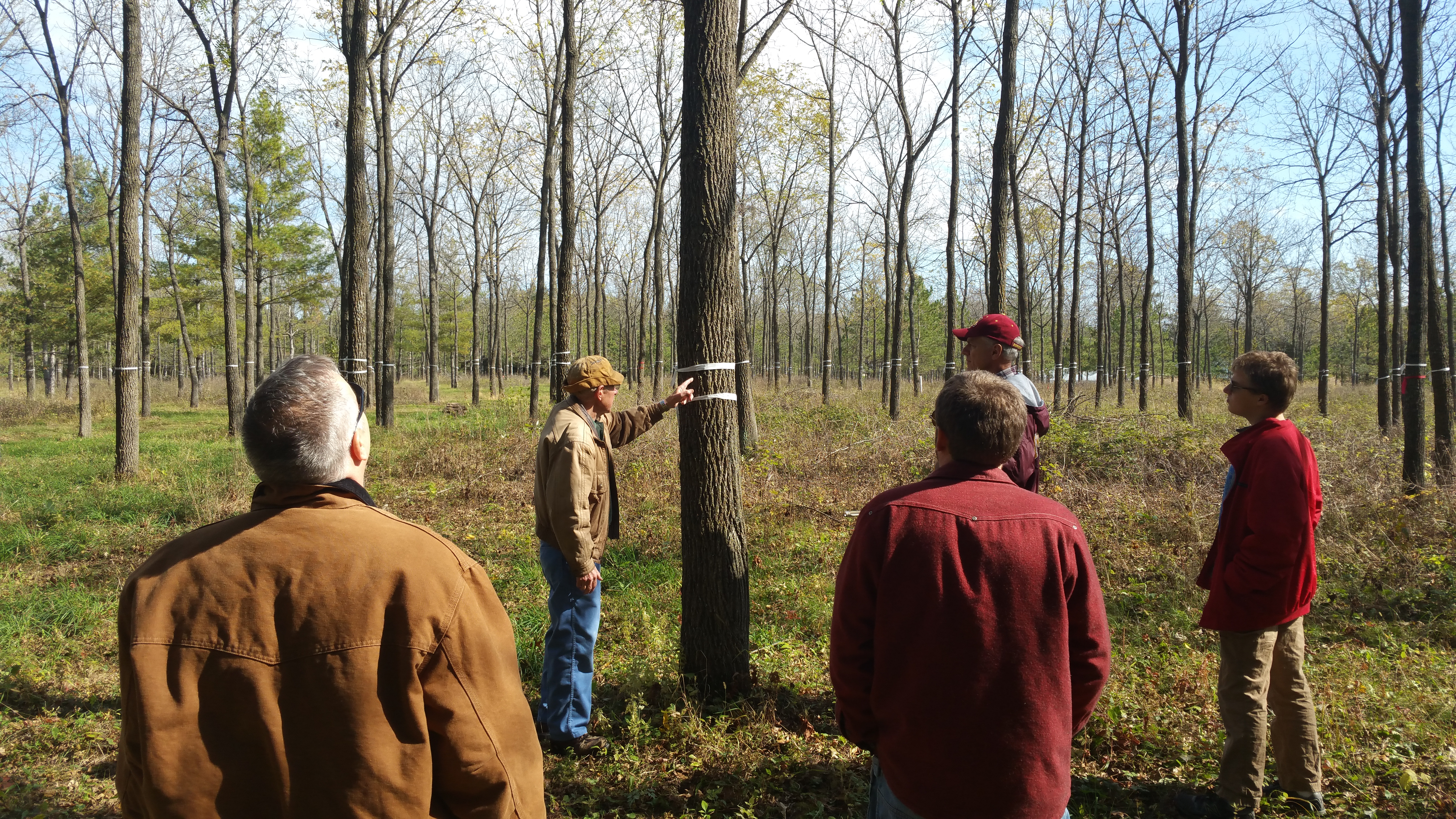 Woodland owner Dan Martin showcases his 35-year old black walnuts to a group of Master Woodland Owners near Fountain, MN.